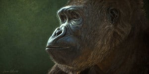 Aaron Blaise Gorilla Animal Art