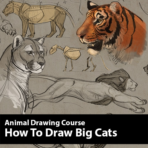 Force Character Design From Life Drawing Pdf : How to draw big cats animal drawing course by aaron blaise