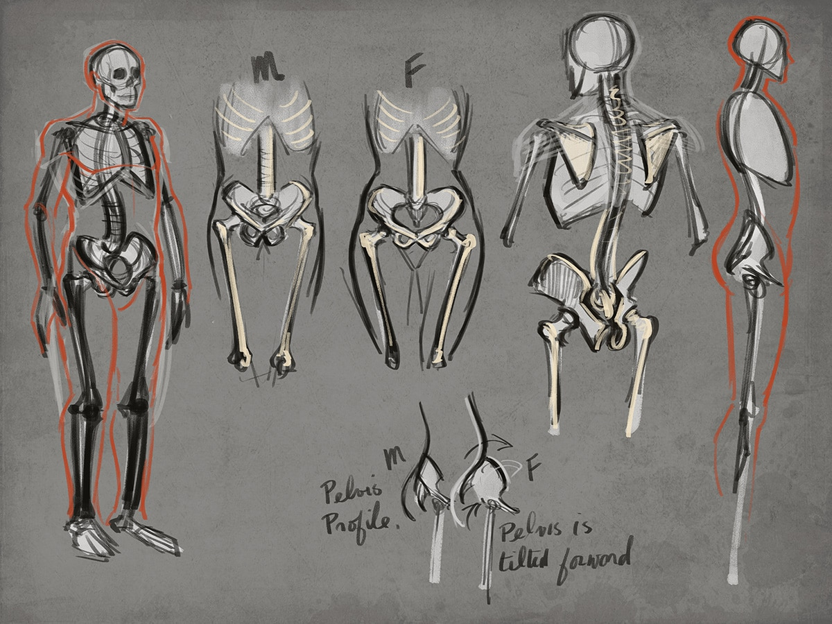 How to figure drawing tutorial drawing human anatomy lessons figure drawing skeleton fandeluxe Image collections