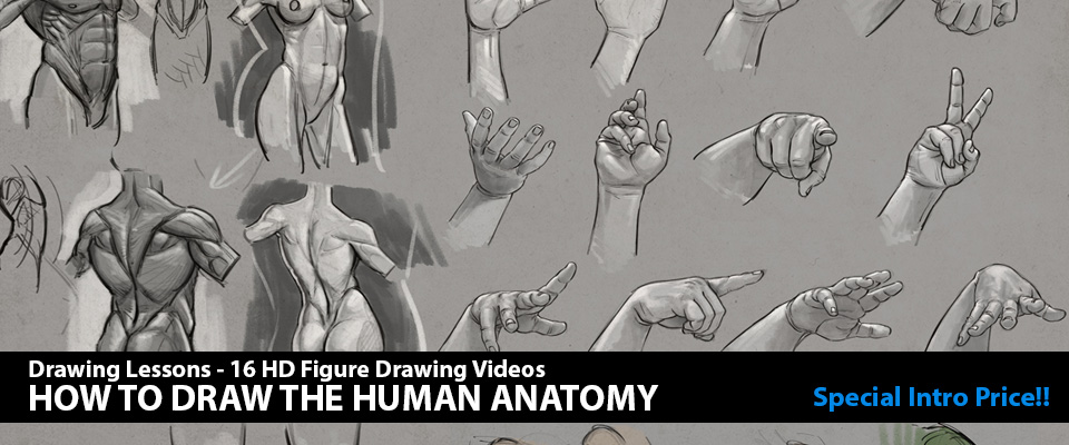 Figure Drawing Tutorial