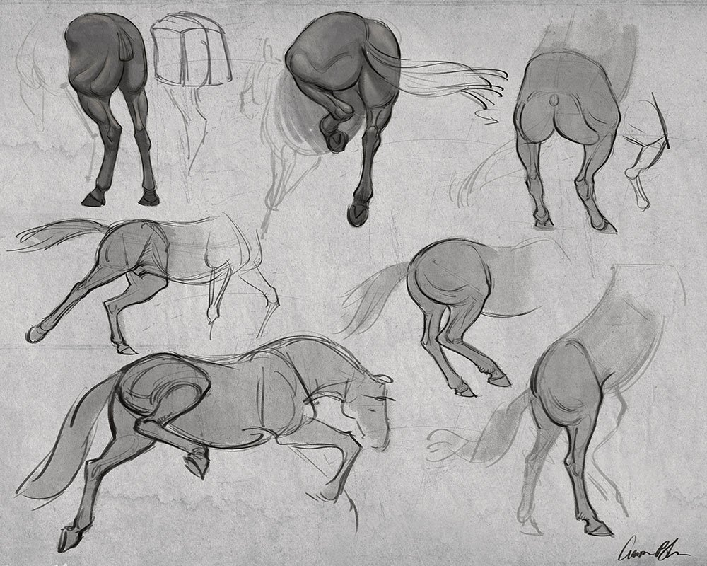 How to Draw Horses Course - The Art of Aaron Blaise