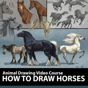 How-to-Draw-Horses-Product-Template