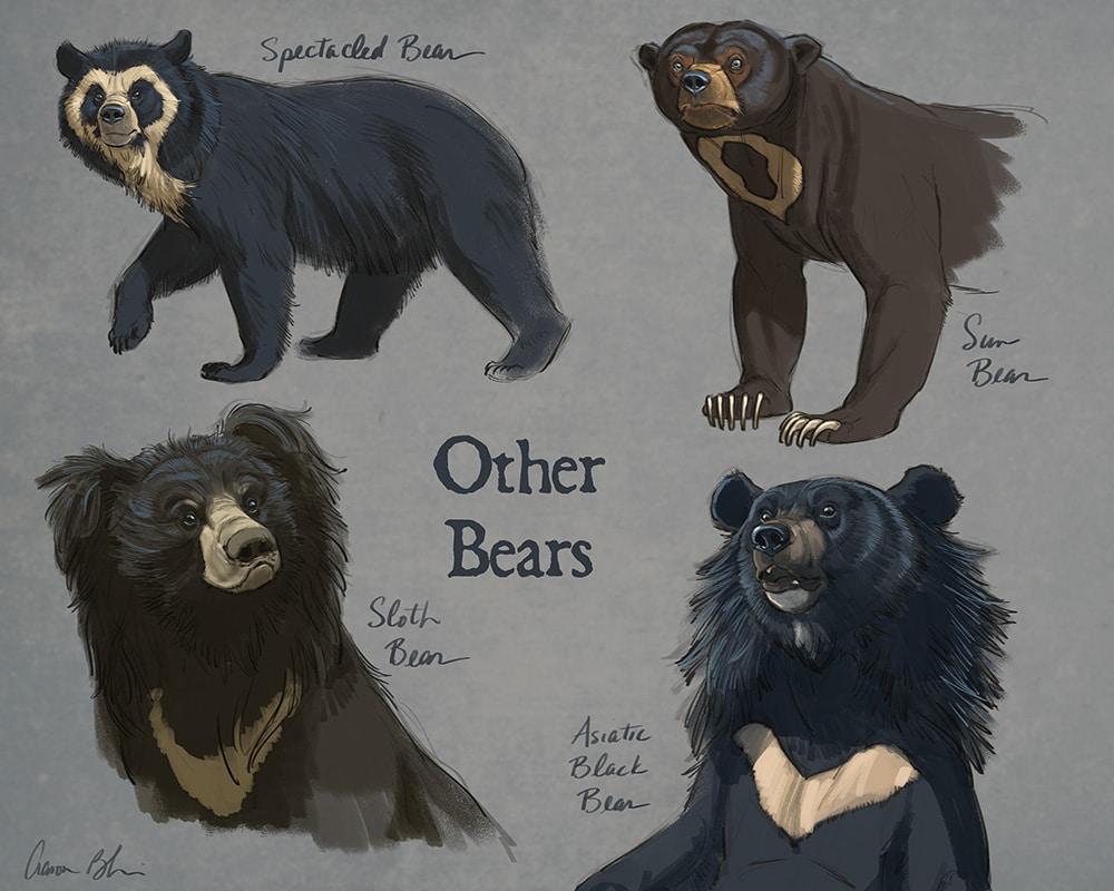 Großartig Bear Anatomy Pictures Zeitgenössisch - Menschliche ...