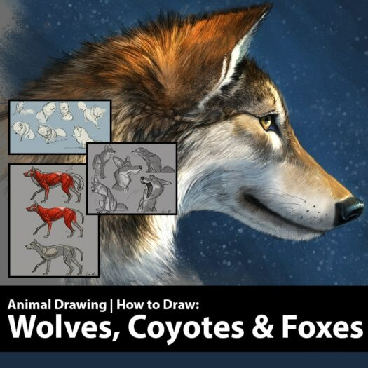 learn to draw wolves