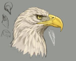 how to draw eagles