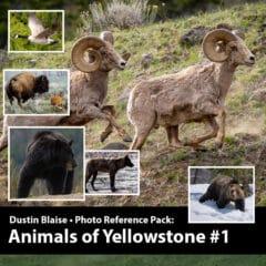 Animals of Yellowstone Photo Pack